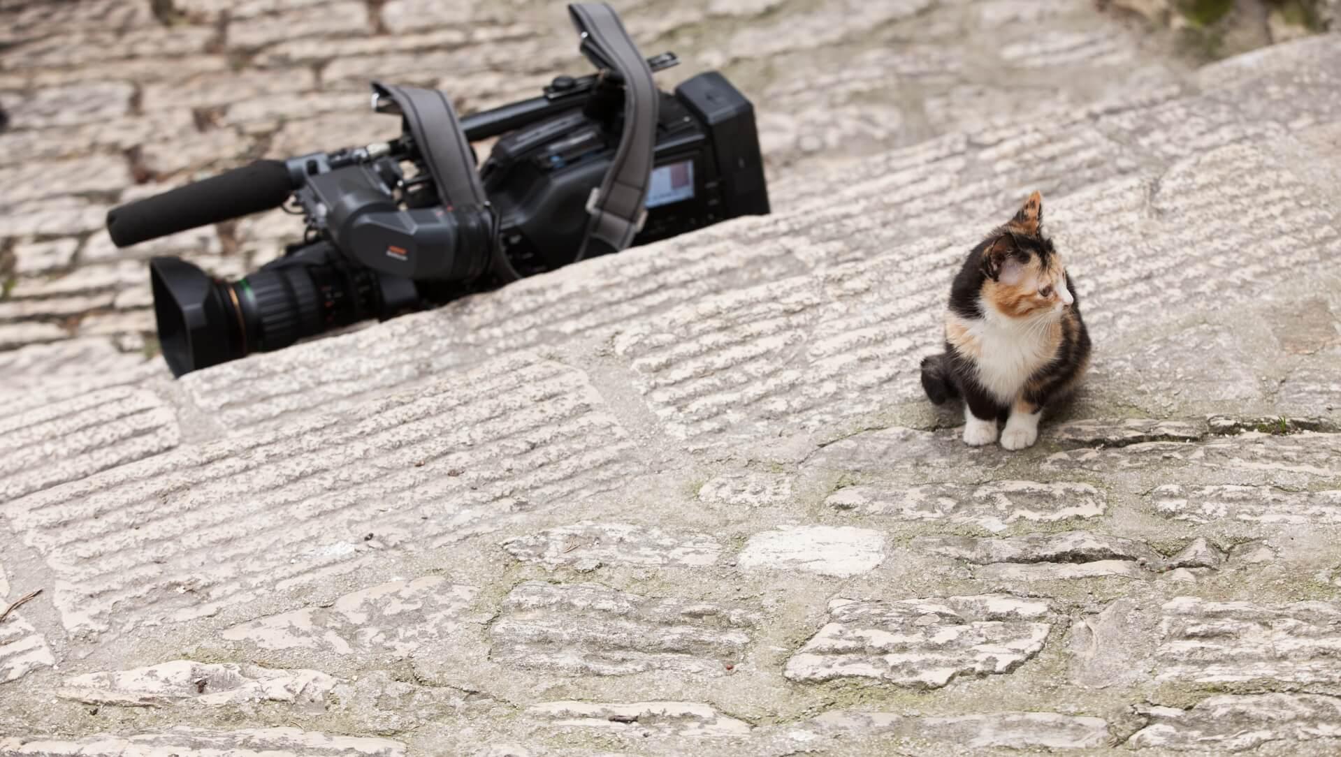 Katze und Kamera