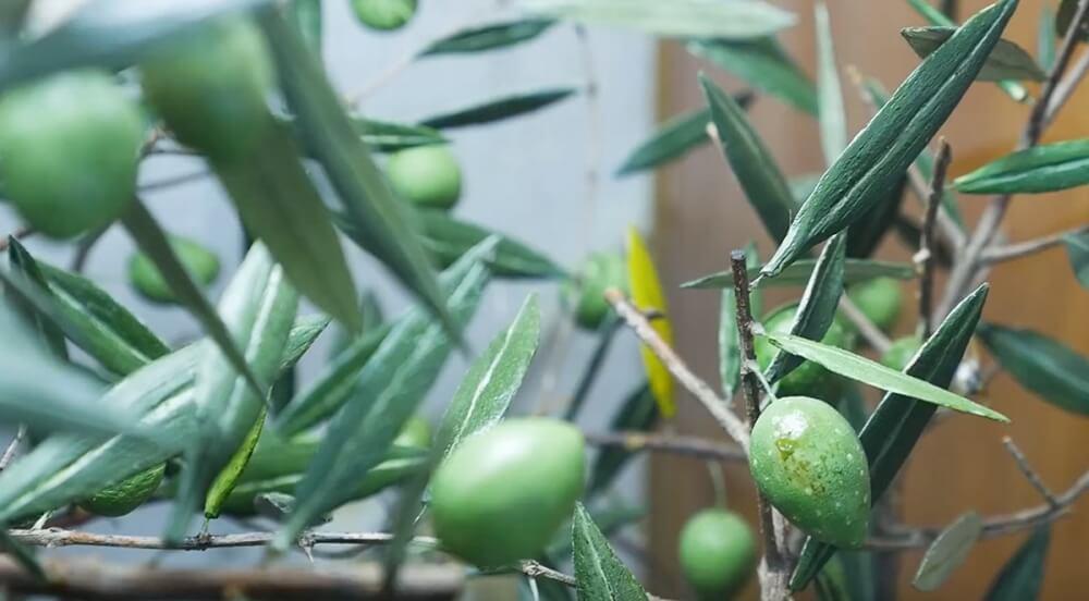 Zdenko Velcic - Oliven aus Holz