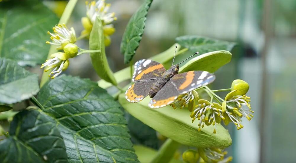Zdenko Velcic - Schmetterling aus Holz