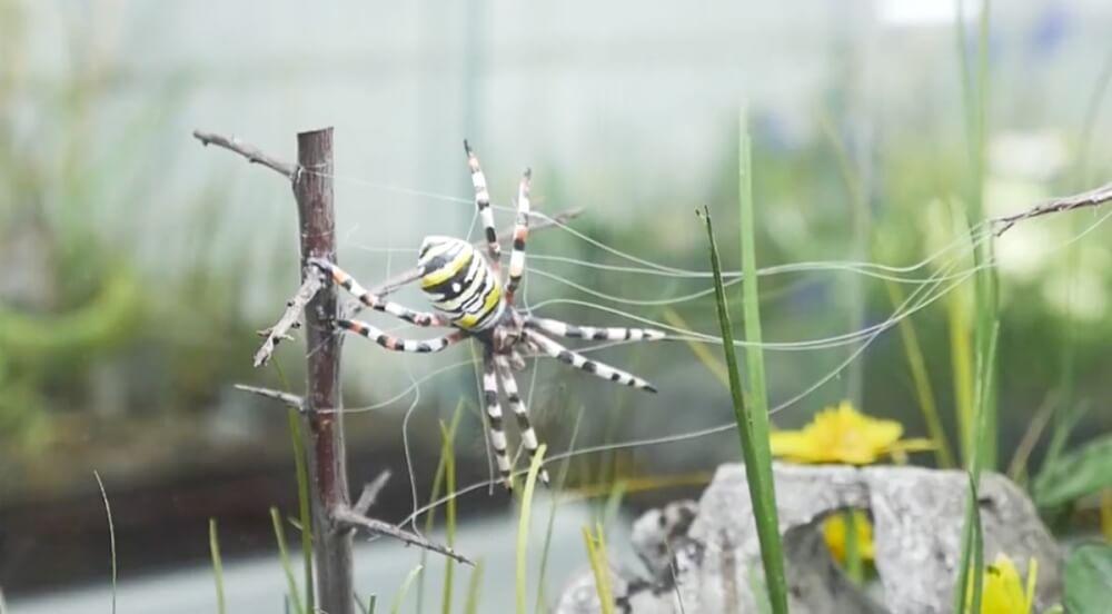 Zdenko Velcic - Spinne aus Holz