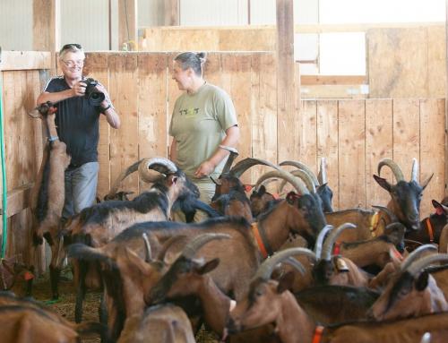 Hela Liverić und die Farm der Tiere